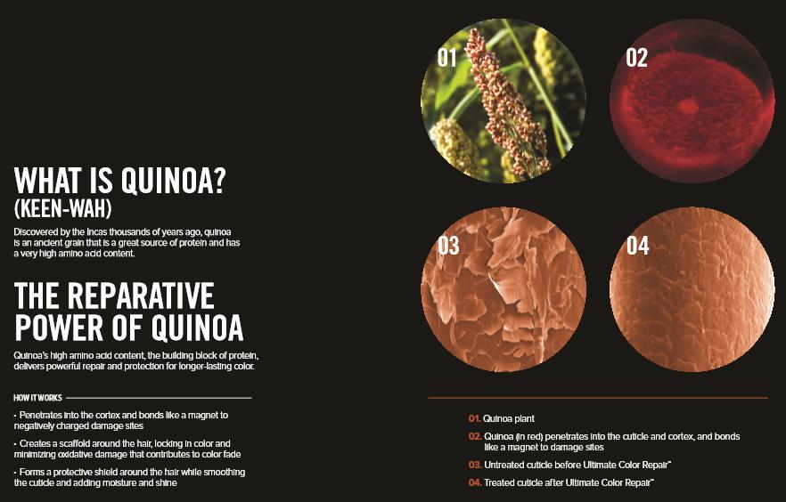 Paul Mitchell Quinoa